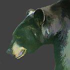 Bear by BBatten