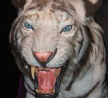 A white tiger EXTREMELY close by phlgrl33