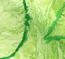 Green Painted Texture with Leaves Sticker