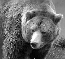 Grizzly in Black and White by Tiffany Vest