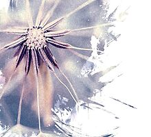Dandelion Blue Graphic - Vertical by alyphoto