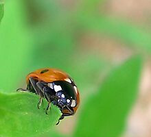 Good luck - Ladybug Close up by NicoleBPhotos