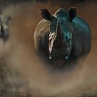 Steamy Rhino by Robert  Anthony