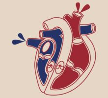 An illustration of a working heart by jazzydevil