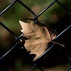 leaf/fence by etccdb