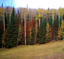 Fall in Flagstaff by Jason White