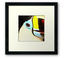 Closeup of a Red-billed Toucan at Iguassu, Brazil.  Framed Print