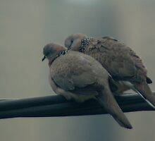 Lovebirds by Michael Naylor