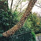 Bubblegum tree by rita flanagan