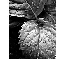 Hydrangea raindrops III Photographic Print