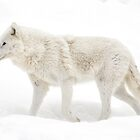 Winter Wolf - Walking Winter Wonderland by Poete100