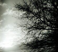 tree by blackbear