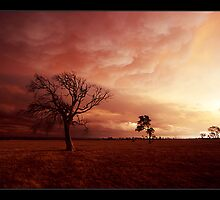 under the apocolypse - Victorian bushfires 2006 by Tony Middleton