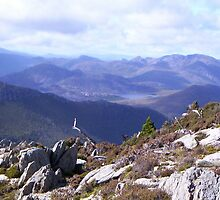 on Mt Read, Rosebery, Tasmania by gaylene