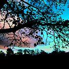 Sky Blue Pink by joconti