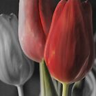 Red Tulips by SwainPhotography