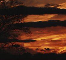fire in the sky by Linda Sannuti