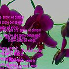 Orchids are always a poem by marchk