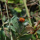 Lady Bug by mik013