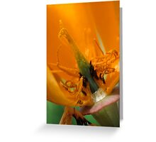California Poppy Greeting Card