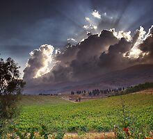 In The Grape Field by Tony Elieh