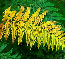 Ferns by Patrick Morand
