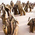 Beach Skeletons by Susan Gottberg