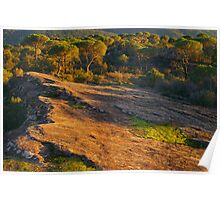 Sunset light in La Plaine des Maures Poster