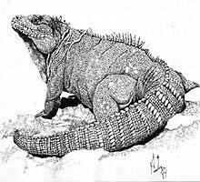 Robbie, Ricords iguana by Preston  Shupp