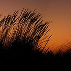 grasses at sunset by Ian Robertson