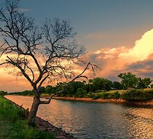 River Tree by JohnDSmith