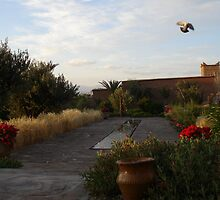 Dove in Flight by probono