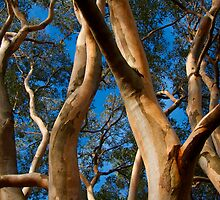 Gum Tree Uprising by Roger Barnes