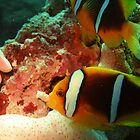 Clown fish  by blew12bandit