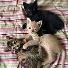 Three little kittens... by Louise LeGresley