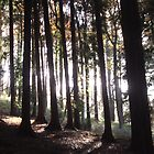 Light behind the Trees by forestphotos