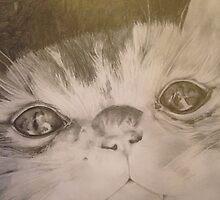 Curious Kitten by jpohlman