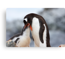 "Gentoo Penguin and Chick ~ ""Meals Home Delivered"" Canvas Print"