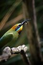 Rainbow Bee Eater by SD Smart