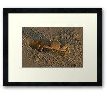 Ghost Crab Framed Print