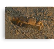 Ghost Crab Canvas Print