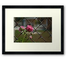 Pastel And Rust Framed Print