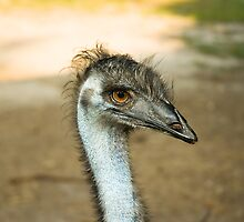 "Emu Eyes by Arthur ""Butch"" Petty"