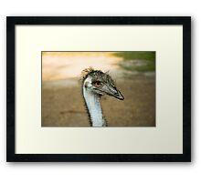Emu Eyes Framed Print