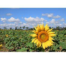 Sunny Hillside Photographic Print