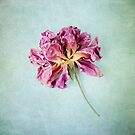 Fabulous Flowers by Colleen Farrell