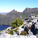 on Marions Lookout      by  Cradle Mountain by gaylene