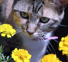 Lilly And The Flowers by Kathleen Struckle
