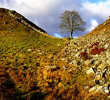 Sycamore Gap by nazboo
