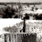 Stump by Katie Sumner-Cann